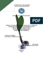Stana-Iulian-Octavian-rezumat.pdf