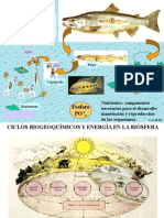 Ciclo de Nutrientes-ecologia