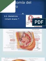 Anatomía Del Útero