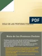 4-CiclodelasPentosasFosfato (1).pdf
