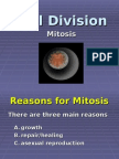 Ppt Mitosis