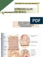matrix extracelular y membrana basal