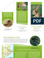 New England Cottontail Pamphlet