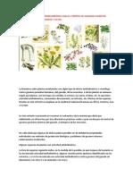 Plantas Medicinales Antihelmínticas Para El Control de Gusanos Parásitos Internos Del Ganado