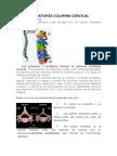 ANATOMÍA COLUMNA CERVICAL 1.docx