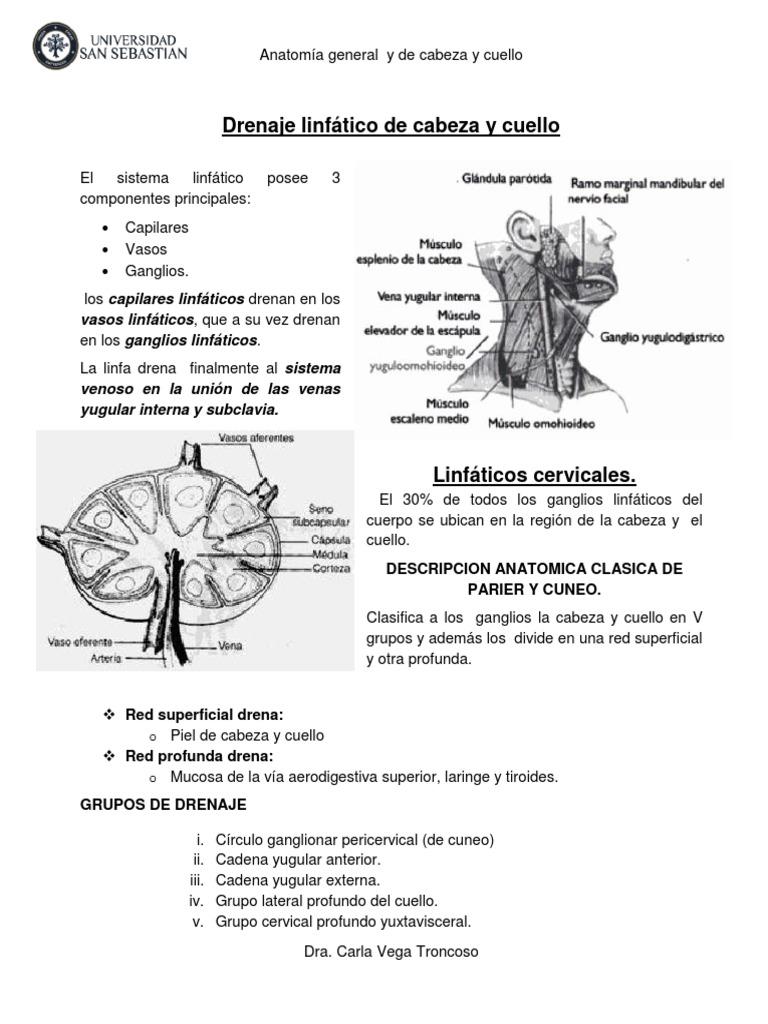 19- Drenaje Linfatico de Cabeza y Cuello