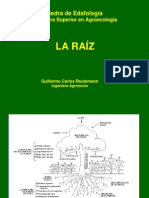 Sistema Radicular