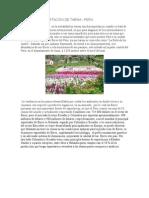 FLORES DE EXPORTACION DE TARMA.docx