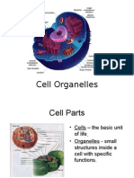 2 1 b cell organelles