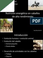 Nutrición Energética en Caballos de Alto Rendimiento