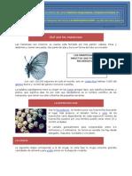 Práctica_19-Mariposas