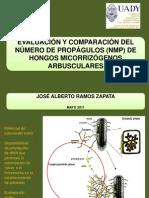 EVALUACIÓN Y COMPARACIÓN DEL NÚMERO DE PROPÁGULOS (NMP) DE HONGOS MICORRIZÓGENOS ARBUSCULARES