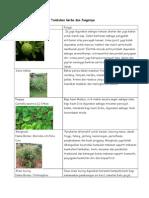 Tumbuhan Herba Dan Fungsinya