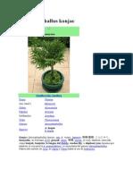 Alimentos del sudeste asiático Amorphophallus Konjac