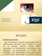Reflejos fisiologia 2