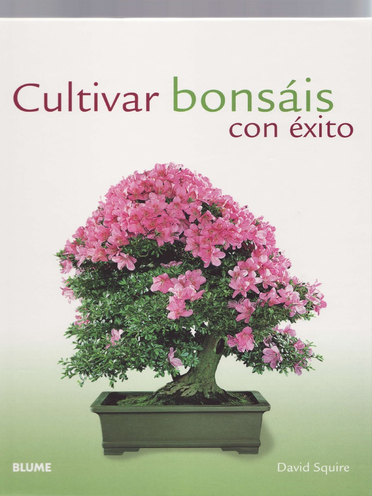 Como cultivar bons is con exito for Como cultivar bonsais