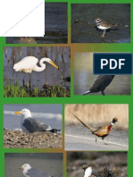 bird id practice similar pdf