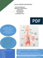 Farmacologia Del Aparato Respiratorio Diapossss