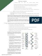 Ácidos Nucleicos - simbiotica