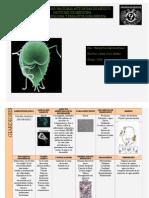 Parasitologia Medica (Tablas)