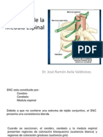 1= Medula Espinal.pdf