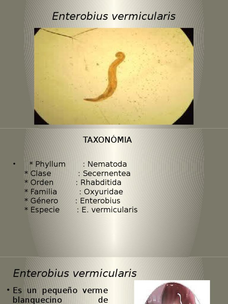 enterobius vermicularis was ist das