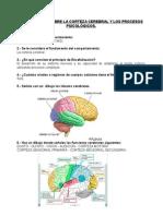 Cuestionario Sobre La Corteza Cerebral y Los Procesos Psicológicos
