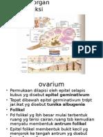 Histologi Reproduksi Wanita