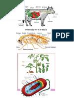 Digestion Vaca, Grillo, Hongo, Bacteria, Gallina, Lombriz, Pez