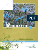 Guide Bourrache