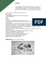 Suport Curs-diode Si Tranzistoare