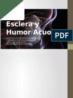 Esclerótica y Humor Acuoso