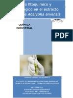 Estudio fitoquimico y microbiológico en el extracto etanólico de Acalypha arvensis y Acalypha Alopecuroidaes