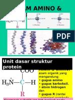 Protein&Asam Amino