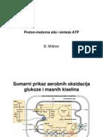 14obk-p24-Proton Motorna Sila i Sinteza ATP[1]