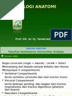 terminologi anatomi Leher