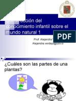 Caracteristica de Las Plantas y Su Clasificacion 2