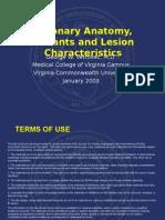 Coronary Anatomy, Variants and Lesion Characteristics