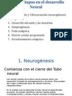 Pasos o Etapas en El Desarrollo Neural