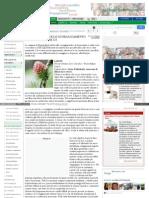 fiori_bach_scoraggiamento_dis.pdf
