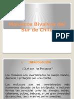 Moluscos Bivalvos Del Sur de Chile