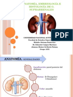 Anatomã-A, Embriologã-A e Histologã-A de Glã¡Ndulas Suprarrenales