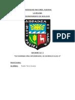 Informe Bilogia N3