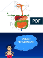 PENCERNAAN (BIOLOGI)