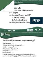 Biology Chapter 8 - Answers