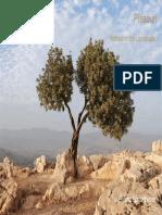 Landscaping Draft Presentation