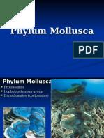 11_mollusca.ppt