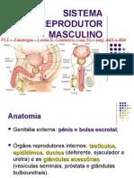 11 Fisiologia Sistema Reprodutor