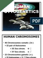K - 8 Human Cytogenetic