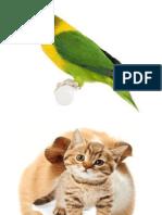 Pet's world Lesson
